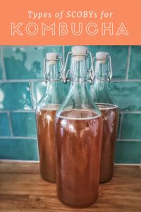 Different types of kombucha SCOBYs
