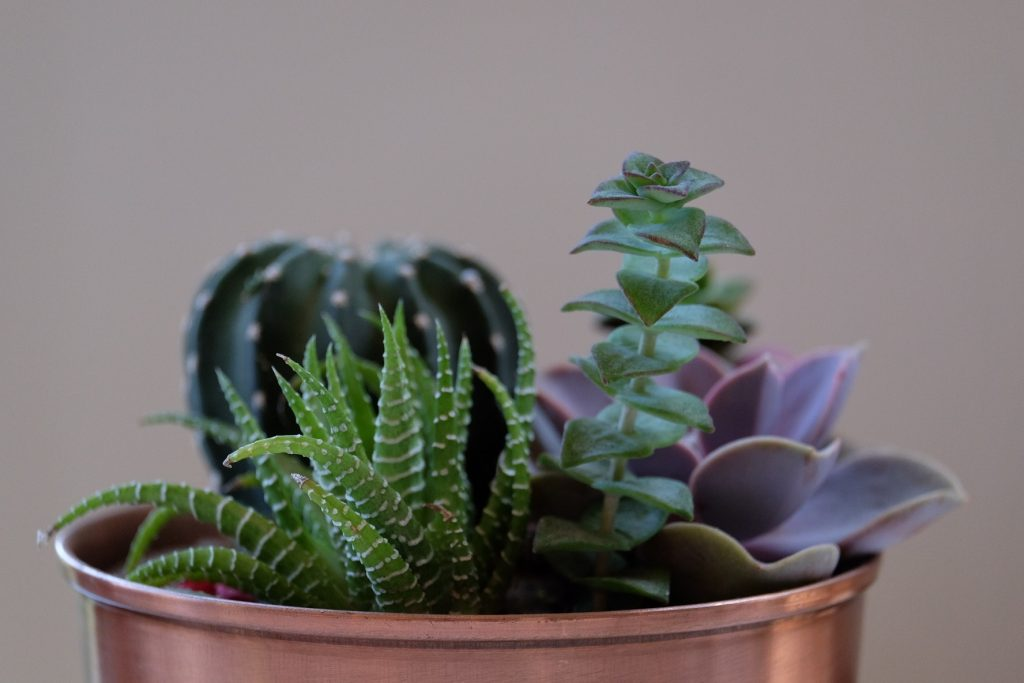 Plants for a home yoga space on a budget
